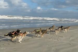 Trainen aan het strand