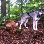 Lekker in het bos