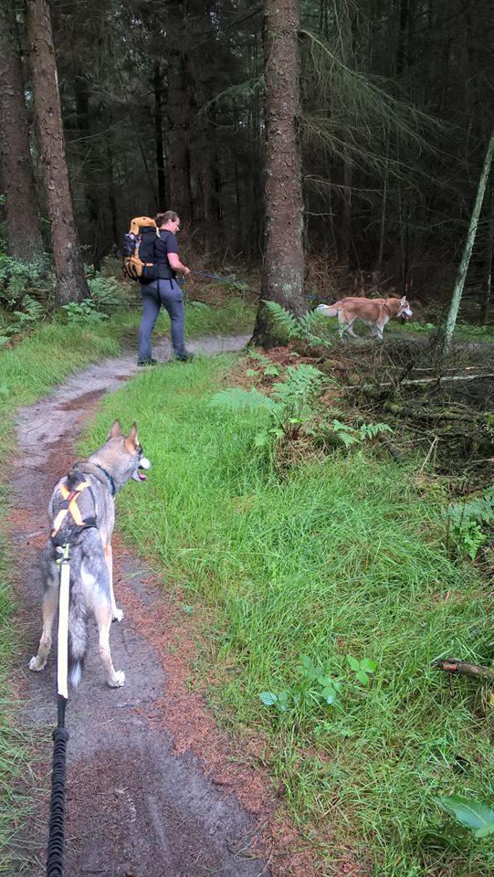 Hike in het bos