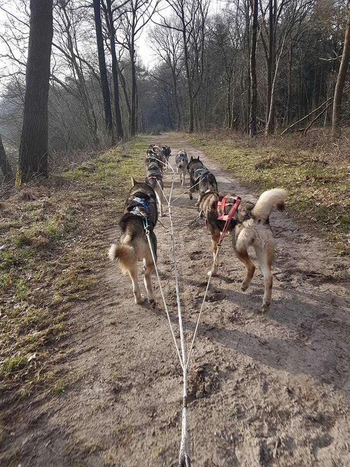 Training Husky's
