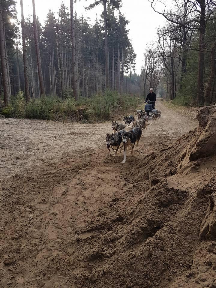 Husky Trainen in het bos