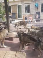 Husky's eten kinderen kijken