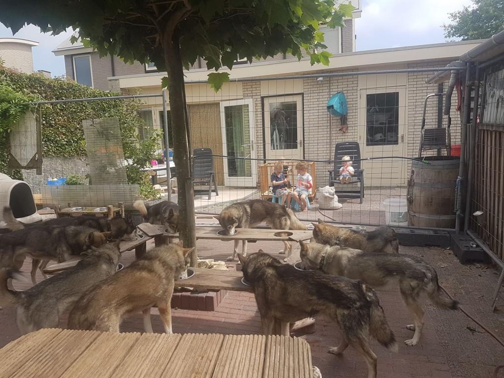 Husky's aan de huskybar