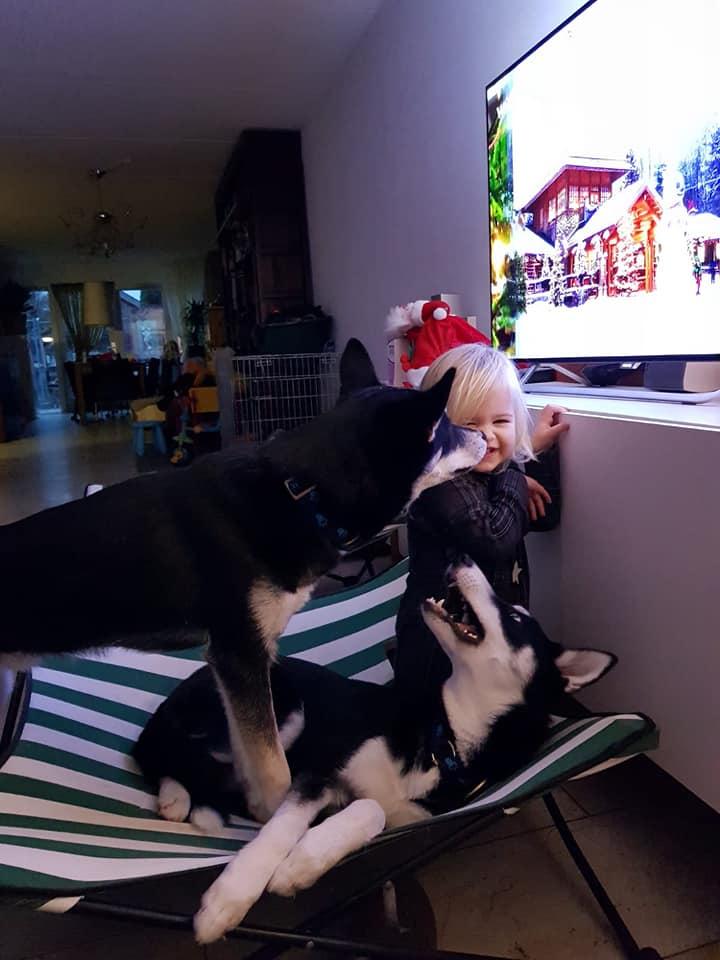 Hallo puppies