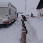 Hondjes buiten