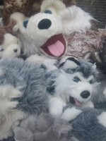 husky wasdag