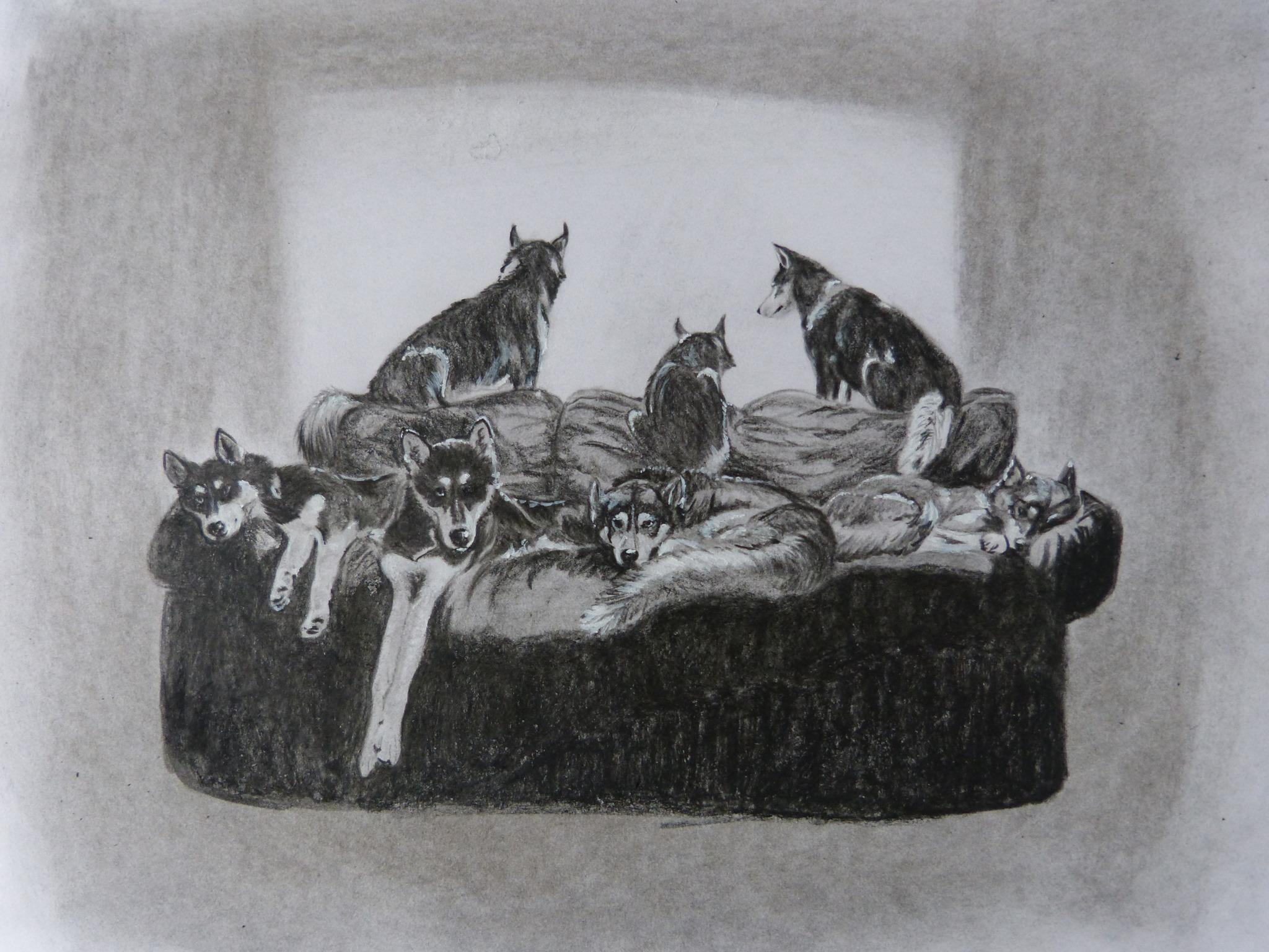 Honden op de bank tekening