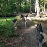 Rennen door het bos