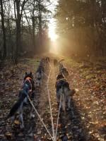 Heerlijk door het bos