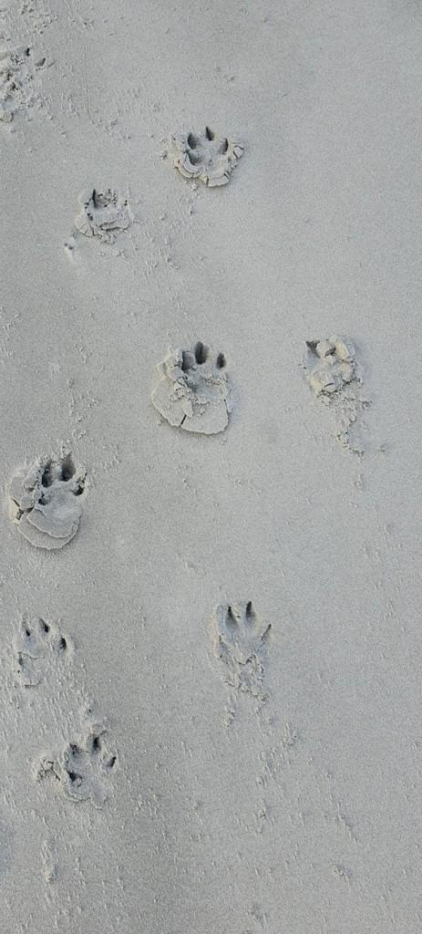 Pootjes in het zand