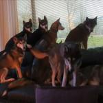 allemaal op de bank Emiel is buiten met pup (2)