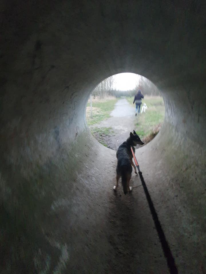 Licht eind van de tunnel