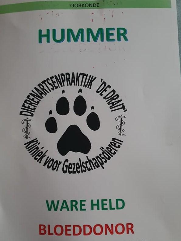 Ware Held Hummer